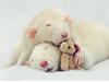 Adopción de roedores, lagomorfos y demás