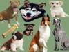 Fichas Generales - Perros