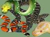 Fichas Generales - Serpientes